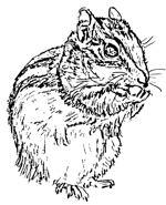 Squirrel Scroll Saw Pattern