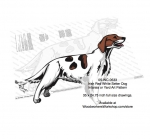 Irish Red White Setter Dog Intarsia or Yard Art Woodworking Pattern