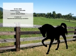 Horse Pawing Silhouette 4 ft Tall Yard Art Full Size Woodwork Pattern woodworking plan
