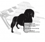 05-WC-0762 - Portuguese Water Dog Yard Art Woodworking Pattern