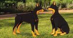 19-W3055 - 3-D Doberman Pinscher Dogs Woodworking Plan Set - 2 designs included