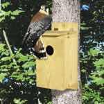 Small Raptor Nest Box Woodworking Plan. woodworking plan