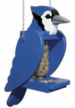 Blue Jay Pop Bottle Bird Feeder Woodworking Plan.