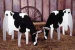 Bovine Beauties Full Size Woodworking Plan.
