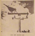 Early Bird Weather Vane Vintage Woodworking Plan